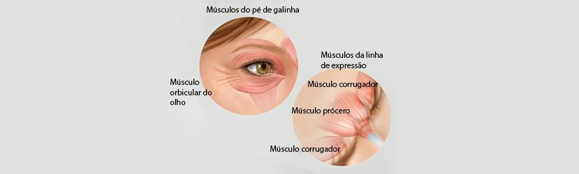 Funcionamento do Botox