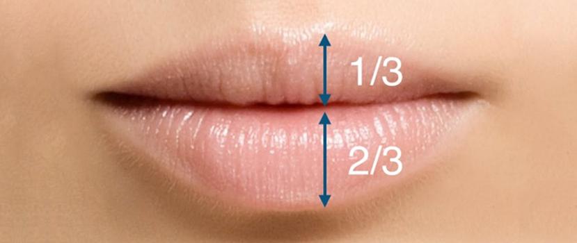 Relação Entre o Volume Ideal Entre os Lábios Superiores e Inferiores