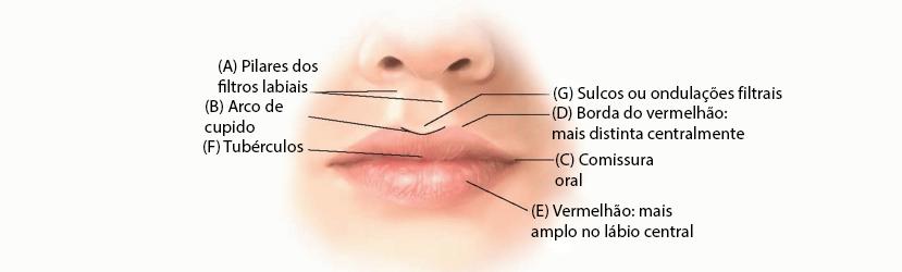 Anatomia da Região Oral e Perioral