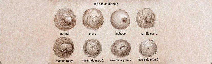 Ilustração de 8 Tipos Diferentes de Mamilos