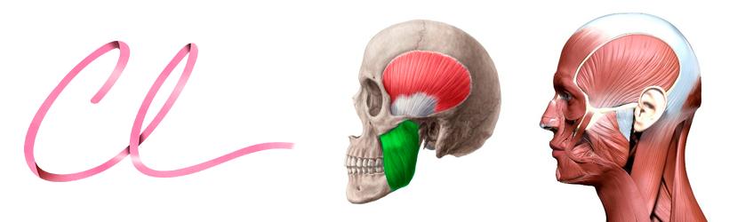 Ilustração da Localização do Músculo Masseter na Face