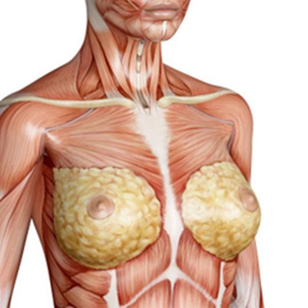 Glândula, Pele e Revestimento Cutâneo